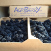 But Have You Tried an AGRIBERRY Blackberry?