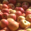 Honey Crisp Apples Available Now! (Click for Weekly Market Info)