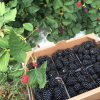 July Farm Visit and Picking Event