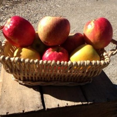 mountain grown apples