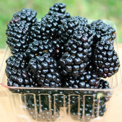 Blackberries from Agriberry Farm