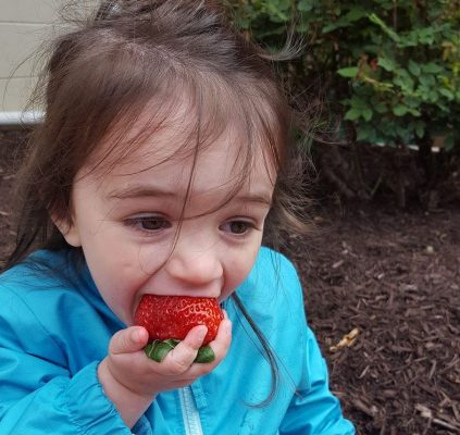 Strawberry Time!