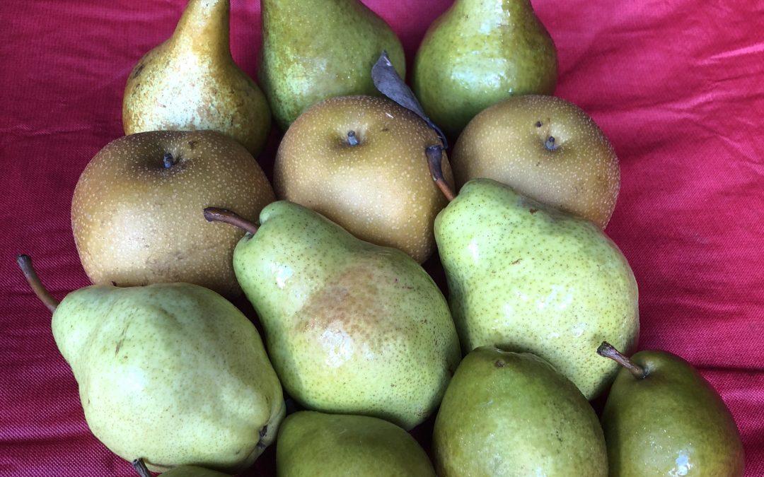 Pear Care