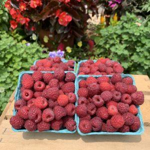 Half-pints of sweet, juicy red raspberries